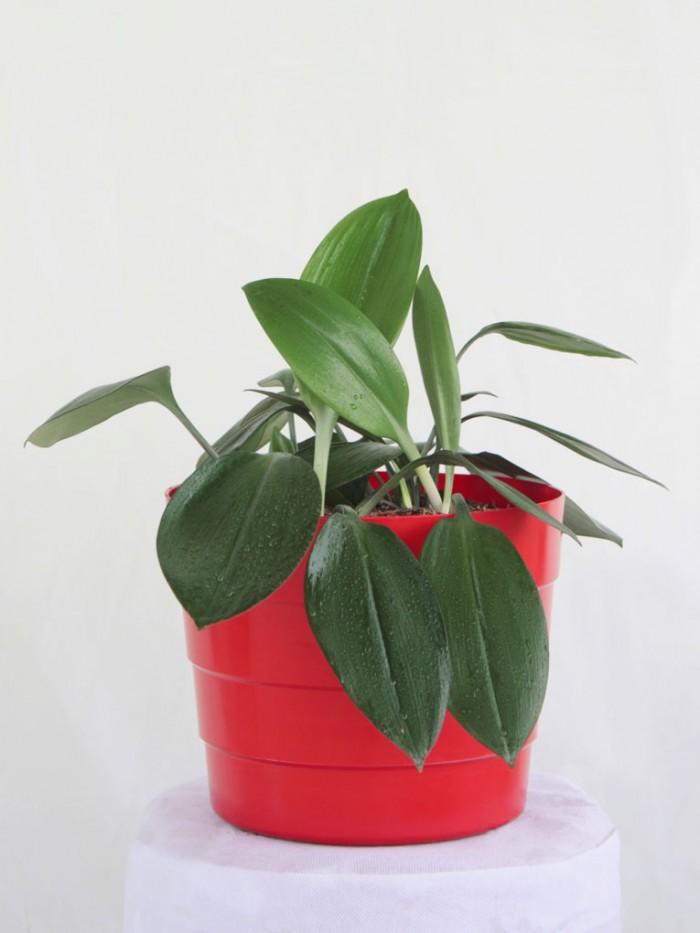Planta Del Billete