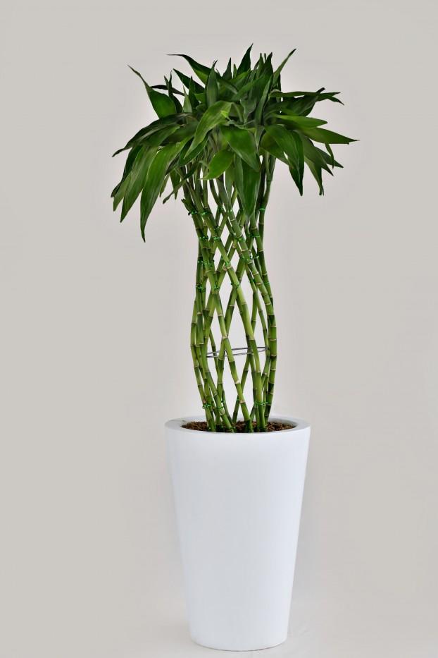 Lucky Bambu Trenzado
