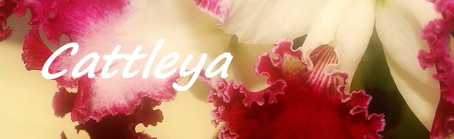 Cuidado de Cattleya
