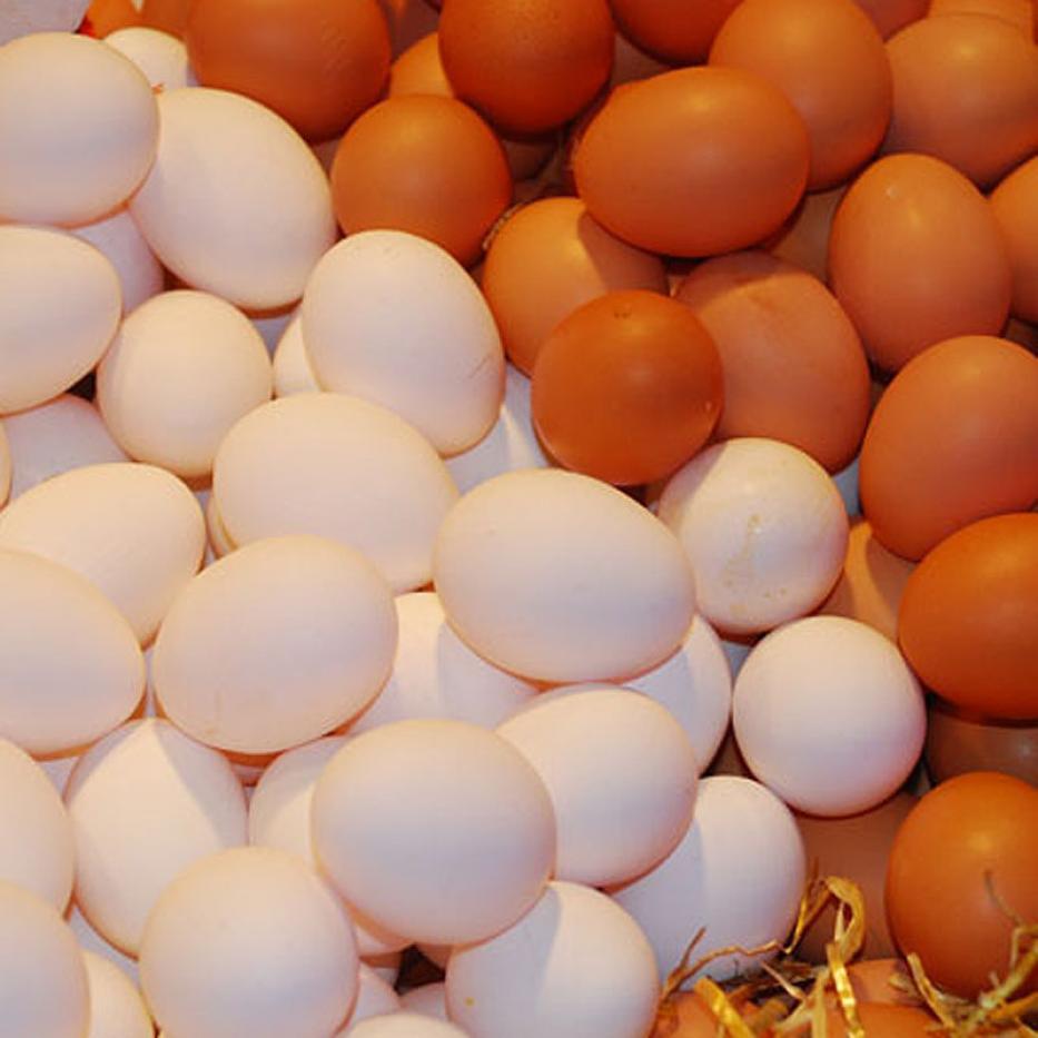 Panal de Huevos AAA