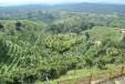 Finca Cafetera para la Venta en Filandia.En el Sector del Paisaje cultural cafetero