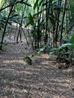 Finca en Venta en Malabar
